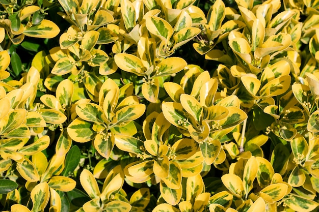 Groen en geel blad