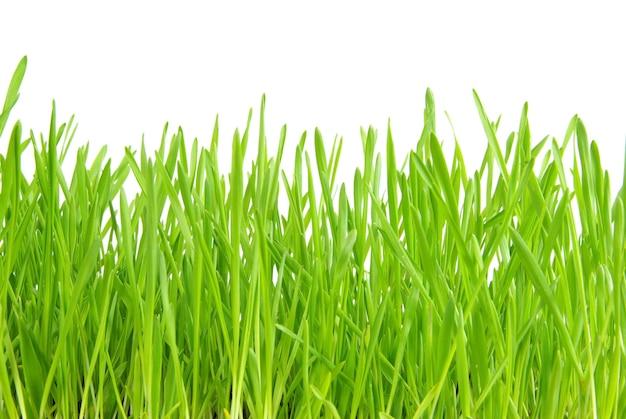 Groen gazon dat op wit wordt geïsoleerd