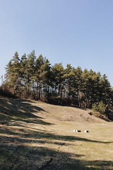 Groen gazon dichtbij dennenbos
