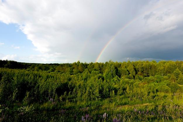 Groen gebladerte in een gemengd bos, blauwe lupinen en een donkere stormachtige lucht, waarop een gekleurde regenboog gloeit, een landschap van onweersbuien