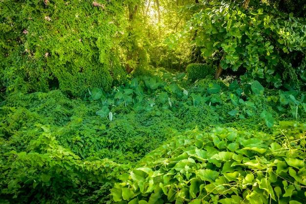 Groen gebladerte in het atlantische woud in joao pessoa paraiba brazilië op 2 april 2021