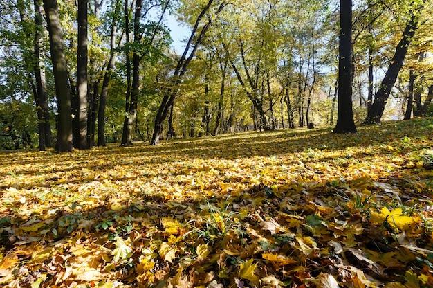 Groen-geel tapijt van herfstbladeren met schaduw van bomen in stadspark.