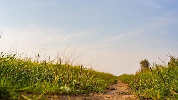 Groen gras aan de rand van een landweg. sterke onscherpe achtergrond. ruimte kopiëren.