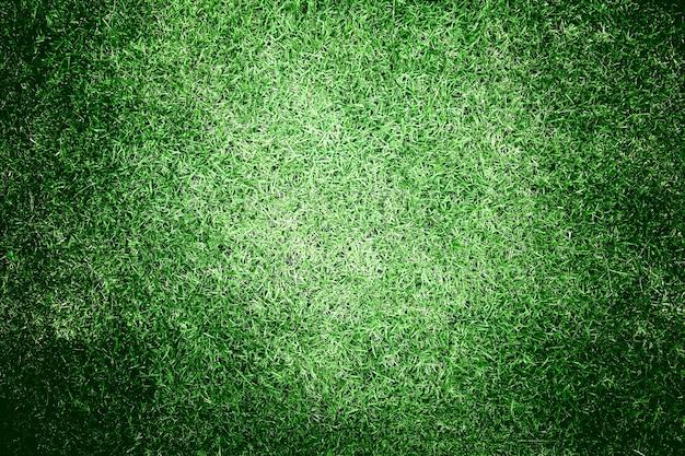 Groen gras achtergrond textuur
