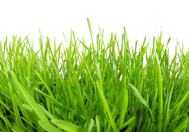 Groen gras dat op witte achtergrond wordt geïsoleerd