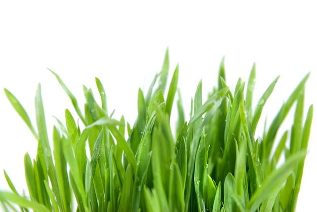 Groen gras geïsoleerd op wit