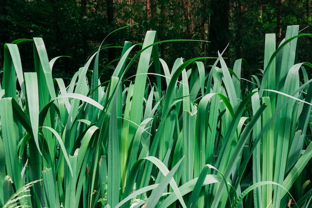 Groen gras groeit overdag in de tuin