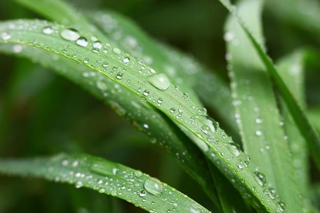 Groen gras in de natuur met regendruppels