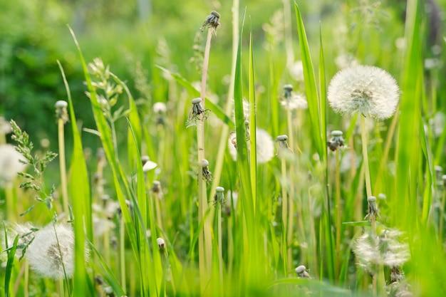Groen gras in de weide, de achtergrond van de de lentetextuur