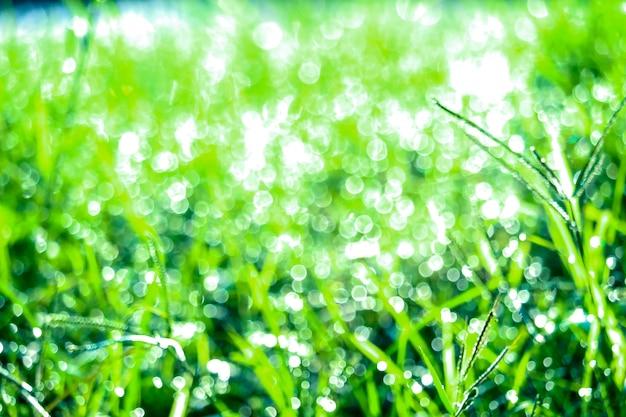 Groen gras in tuin en onduidelijk beeld van waterdaling op bladeren in rainny seizoen