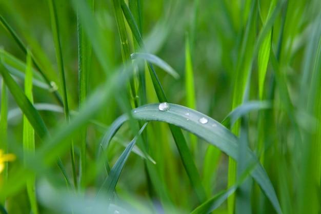 Groen gras met waterdruppel