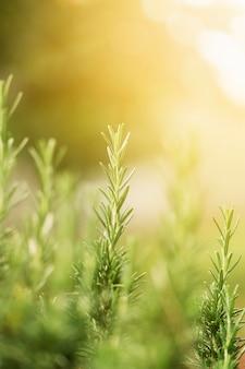 Groen gras met zonnestralen