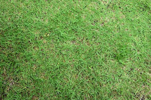 Groen gras naadloze textuur