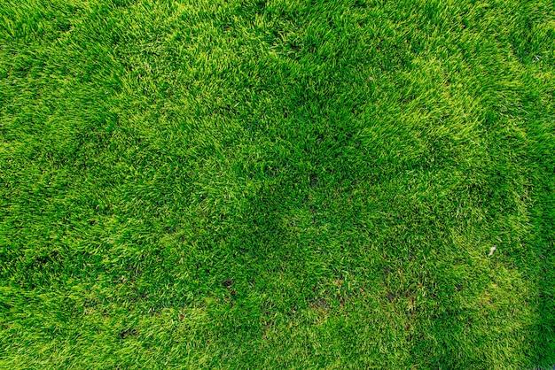 Groen gras. natuurlijke achtergrondstructuur