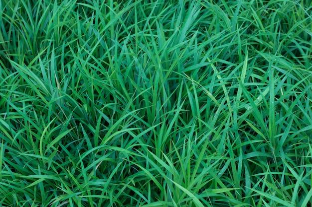 Groen gras natuurlijke textuur