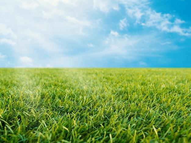 Groen gras of gras op blauwe hemelachtergrond