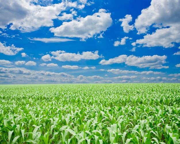Groen gras onder blauwe hemel