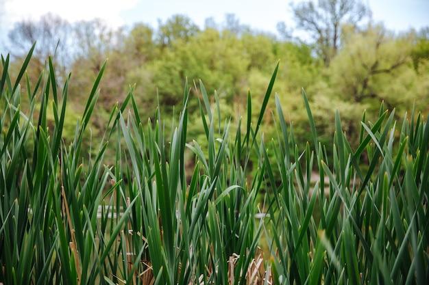 Groen gras op blauwe heldere hemel, lente natuur thema. landschap.