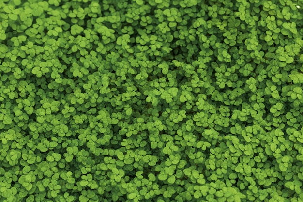 Groen gras op de grond