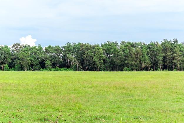 Groen gras op weide