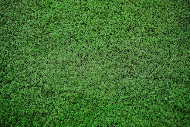 Groen gras textuur achtergrond, uitzicht vanaf de top