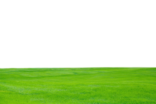 Groen gras textuur achtergrond, vergrote weergave