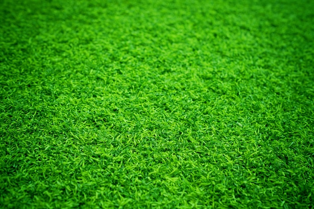 Groen gras textuur achtergrond