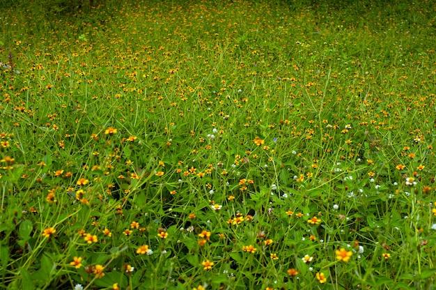 Groen gras textuur en gele bloemen