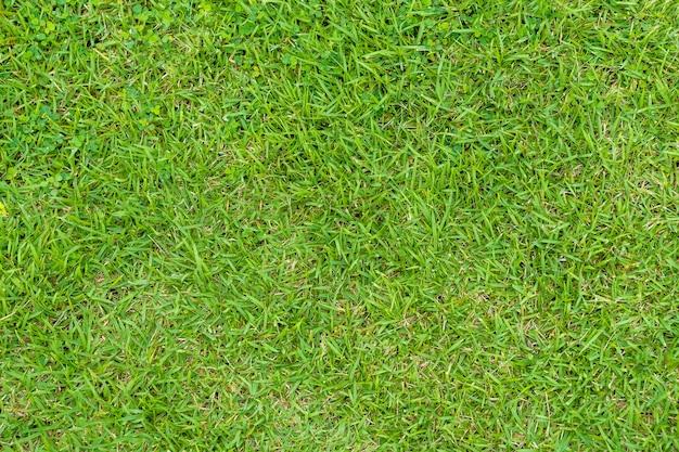 Groen gras textuur. groene gazon tuin textuur achtergrond. detailopname.