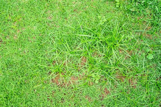 Groen gras textuur voor achtergrond. groene gazon patroon en textuur achtergrond. detailopname.