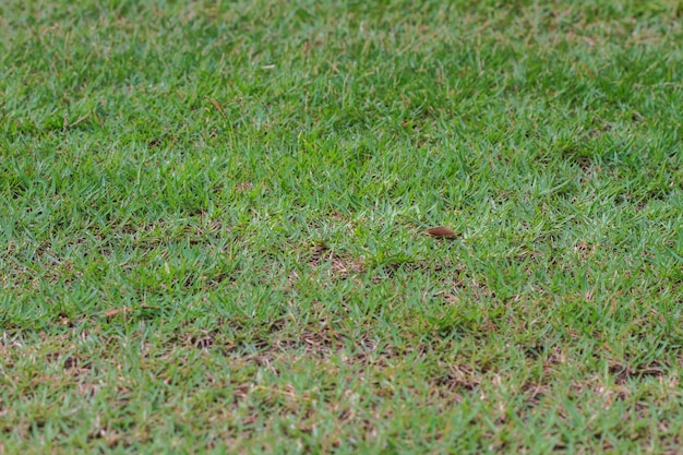 Groen gras veld achtergrond