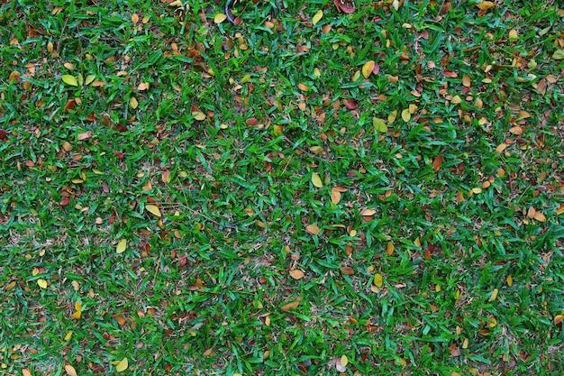 Groen gras voor aardachtergrond