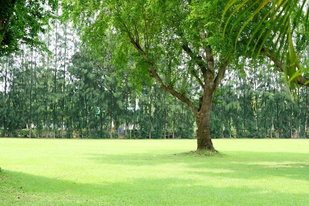 Groen grasgebied en groene boom in de openbare tuin