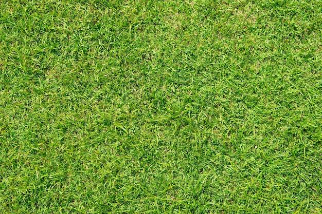 Groen graspatroon en textuur voor achtergrond. close-up beeld.