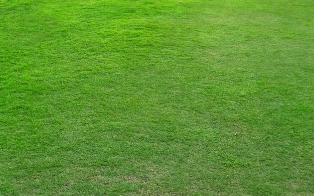 Groen graspatroon en textuur voor achtergrond.