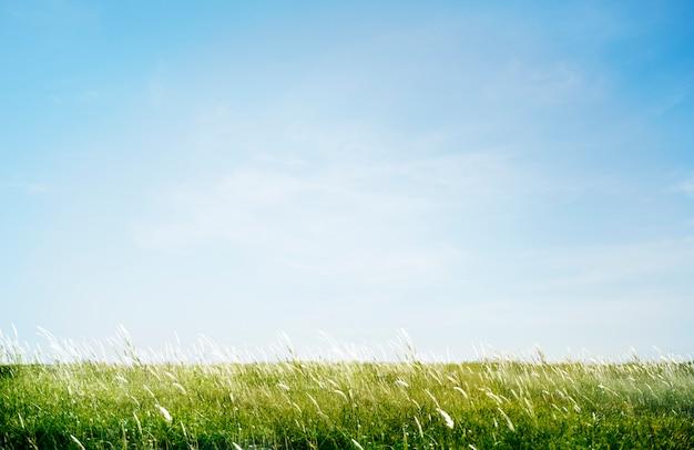 Groen grasrijk parkgebied in openlucht concept