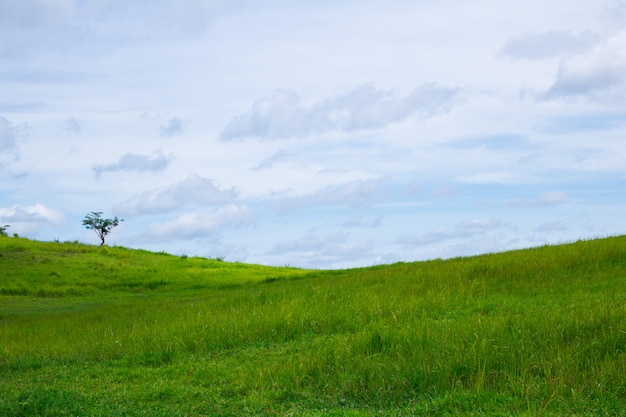 Groen grasveld en blauwe hemel