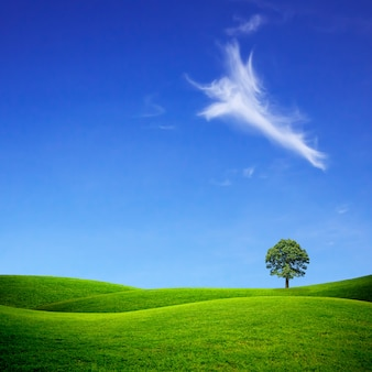 Groen grasveld en heldere blauwe hemel.