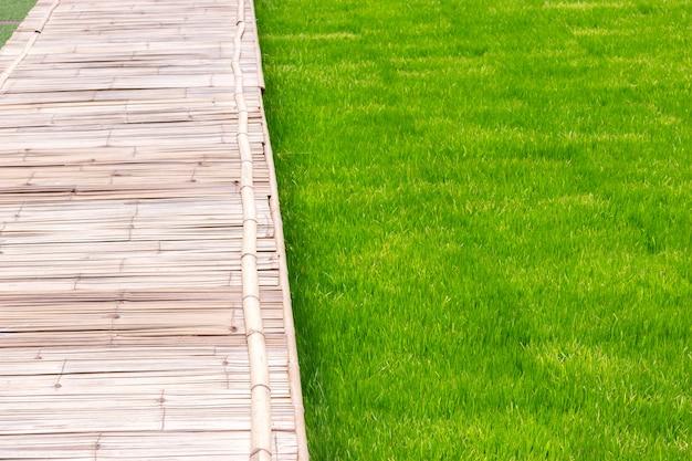 Groen grasveld met bamboe houten wandelpad