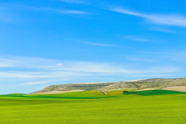 Groen grasveld tegen de blauwe hemel, mooi zonnig landschap