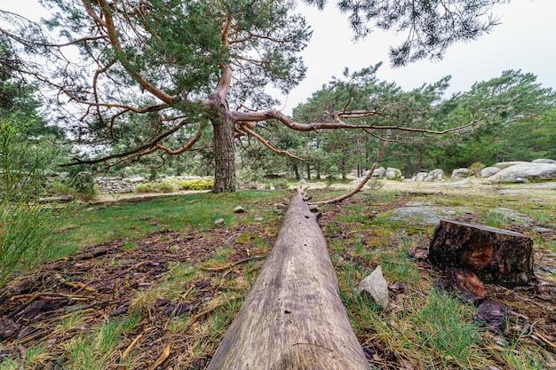 Groen hooggebergte met omgevallen boom in het midden van de afbeelding. canencia madrid.
