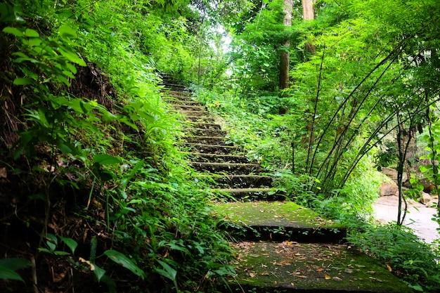 Groen jungle met groen mos en paddestoelen bedekken en groeien op een trap in tropisch regenwoud