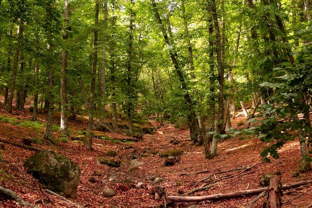 Groen kastanjebos met omgevallen boomstammen.