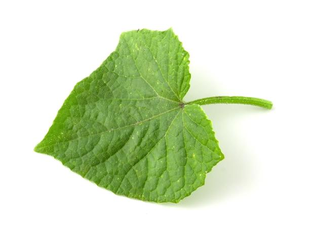 Groen komkommerblad dat op witte achtergrond wordt geïsoleerd