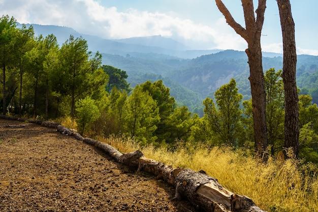 Groen landschap bij zonsondergang met bomen in het bos en omgevallen boomstam.