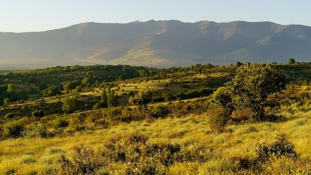 Groen landschap bij zonsopgang met bergen, planten en bomen. riaza segovia