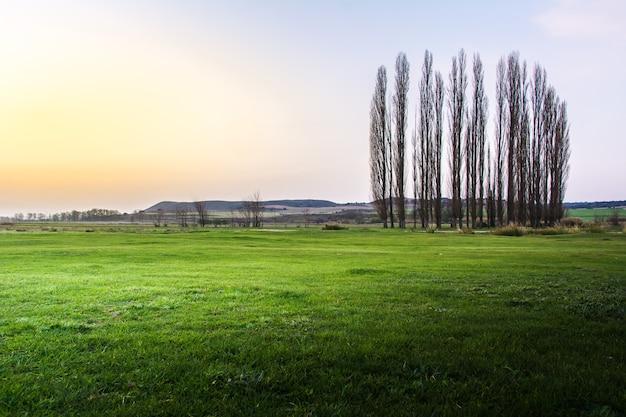 Groen landschap met hoge populieren in het noordwesten van murcia