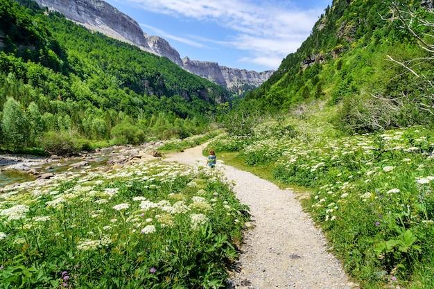 Groen landschap met pad tussen bloemen en bergen in de vallei van de pyreneeën van ordesa.