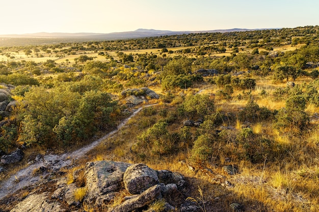 Groen mediterraan landlandschap met schittering van de zon.