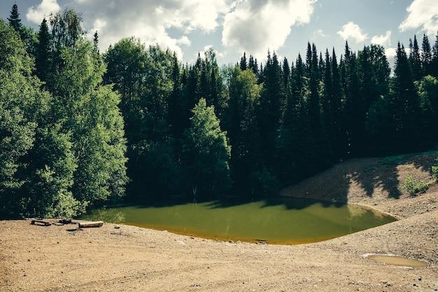 Groen meer in bos onder dennen